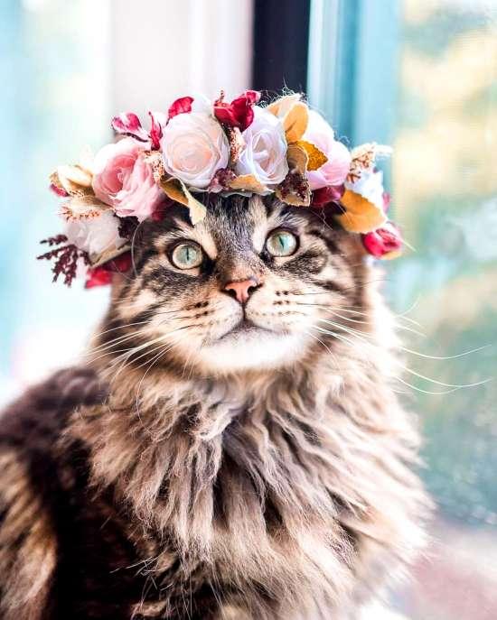 Картина по номерам 40x50 Серая кошка в цветочном венке
